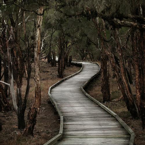 Bush Boardwalk